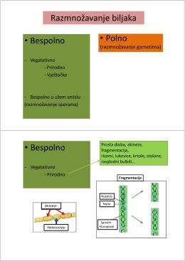 Predavanje IV D Razmnožavanje biljaka 1.10.2012. godine