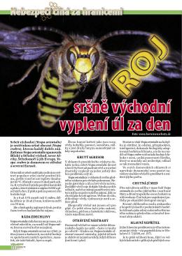 sršně východní vyplení úl za den