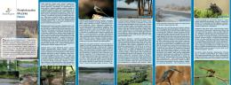 Świętokrzyska Mozaika Rzeki - Natura 2000
