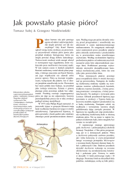 Jak powstało ptasie pióro?