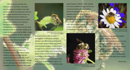 Pszczoła jaka jest każdy widzi. - Ogród Botaniczny Uniwersytetu