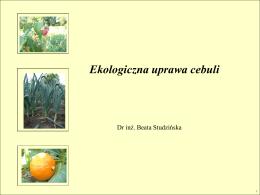 Ekologiczna uprawa cebuli