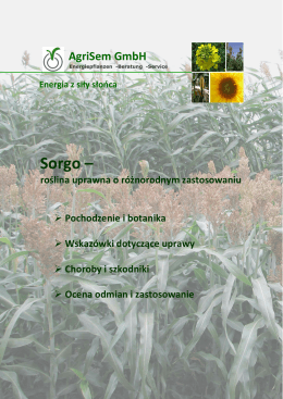Sorgo – - Energiepflanzen Sorghum Saatgut