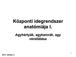 Központi idegrendszer anatómiája I.