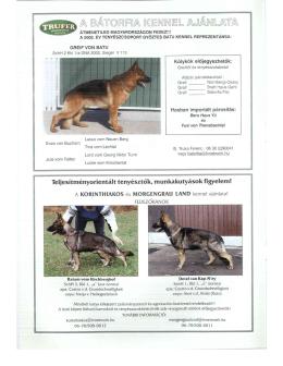 duna kupa - képes beszámoló - Magyarországi Német Juhászkutya