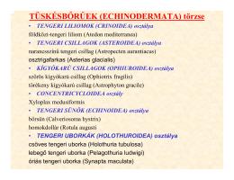 Subdivisio: Enterocoela