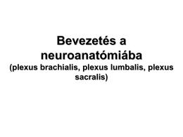 03. Bevezetés a neuroanatómiába