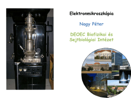 Elektronmikroszkópia Nagy Péter DEOEC Biofizikai és Sejtbiológiai