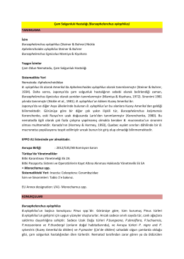 Çam Solgunluk Hastalığı (Bursaphelenchus xylophilus