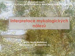Interpretace mykologických nálezů