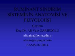 ruminant sindirim sistemi anatomisi ve fizyolojisi