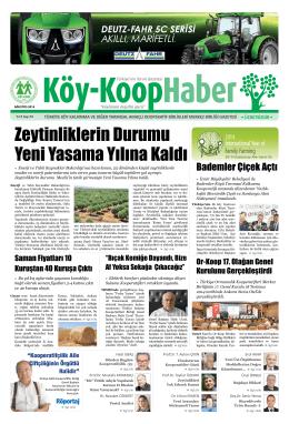 Zeytinliklerin Durumu Yeni Yasama Yılına Kaldı - Köy