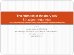süt ineği midesi-30 mart 2014