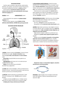 solunum sistemi solunum sistemi organları