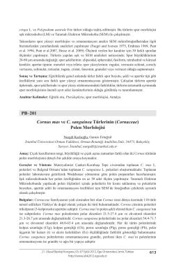 (Cornaceae) Polen Morfolojisi