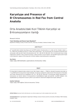 Karyotype and Presence of B-Chromosomes in Red