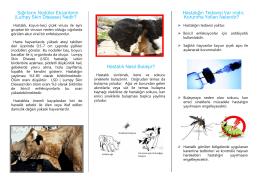 Sığırların Nodüler Ekzantemi (Lumpy Skin Disease) Nedir? Hastalık