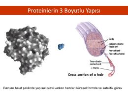 Proteinlerin 3 Boyutlu Yapısı
