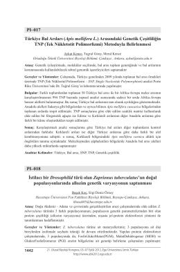PI–017 Türkiye Bal Arıları (Apis mellifera L.) Arasındaki Genetik