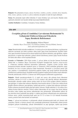 Uresiphita gilvata - Biyoloji Kongreleri