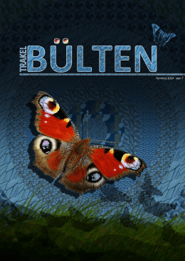 kelebek gözlem raporu