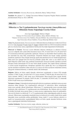 PB–272 Mikoriza ve Tuz Uygulamalarının Narcissus tazetta