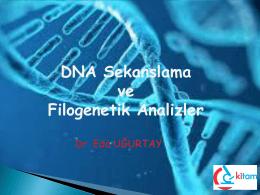 DNA Dizileme ve Filogenetik Analizler