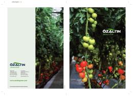 türkçe - Özaltın Holding
