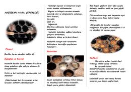 Amerikan Yavru Çürüklüğü - Ankara İl Gıda Tarım ve Hayvancılık