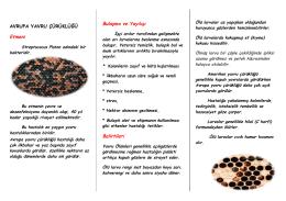 Avrupa Yavru Çürüklüğü - Ankara İl Gıda Tarım ve Hayvancılık