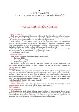 TARLA FARESİ MÜCADELESİ - Ankara İl Gıda Tarım ve Hayvancılık