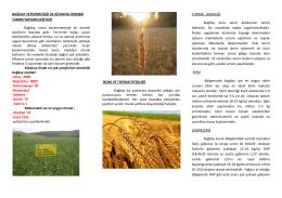 buğday yetiştiriciliği - Kütahya İl Gıda Tarım ve Hayvancılık Müdürlüğü