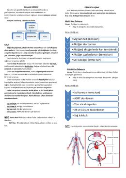 •Sağ karıncık (kirli kan) •Akciğer atardamarı •Akciğer