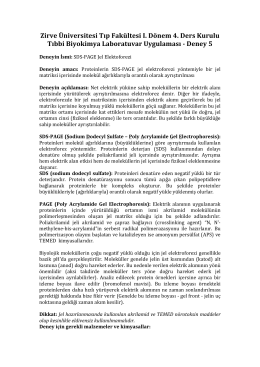 Deney 5 - SDS-PAGE Jel Elektroforez