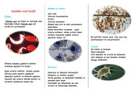 nosema hastalığı - Ankara İl Gıda Tarım ve Hayvancılık Müdürlüğü