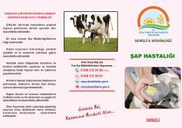 HS_Şap Hastalığı.cdr