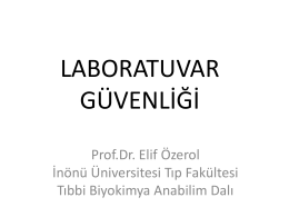 Prof.Dr. Elif Özerol