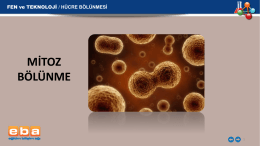 hücre bölünmesi mitoz bölünme