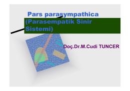 Pars parasympathica (Parasempatik Sinir Sistemi)