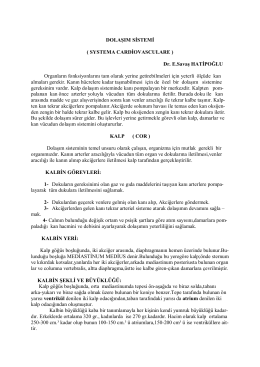 DOLAŞIM SİSTEMİ ( SYSTEMA CARDİOVASCULARE ) Dr. E.Savaş