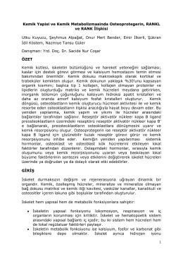 Kemik Yapisi ve Kemik Metabolizmasinda Osteoprotegerin, RANKL