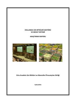 hollanda süs bitkileri sektörü ve mezat sistemi