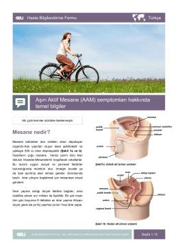 Mesane nedir? Aşırı Aktif Mesane (AAM) semptomları hakkında