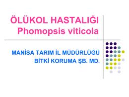 ÖLÜKOL HASTALIĞI Phomopsis viticola