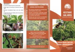 kestane gal arısı - TC Gıda Tarım ve Hayvancılık Bakanlığı