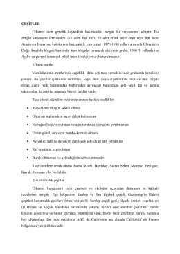 incir pdf