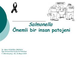 Salmonella Önemli bir insan patojeni, Mine Hoşgör Limoncu