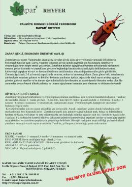 palmiye kırmızı Böceği.cdr