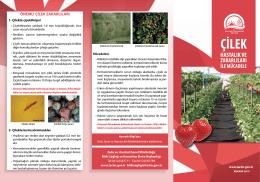 ÖNEMLİ ÇİLEK ZARARLILARI - TC Gıda Tarım ve Hayvancılık