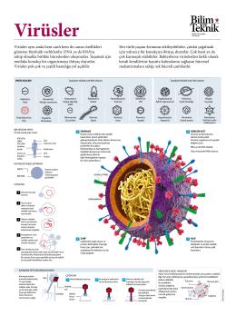 Virüsler - Bilim Teknik
